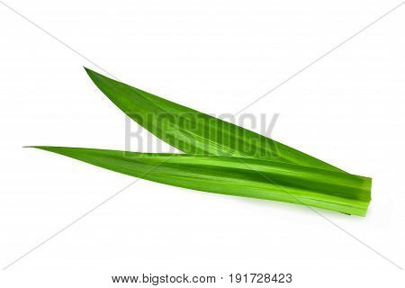fresh green pandan leaves isolated on white background Asian herbs
