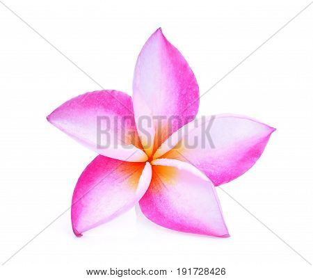 pink frangipani or plumeria (tropical flowers) with drop of water isolated on white background