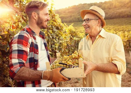 vineyard family tradition - Father and son vintner looking at grapes