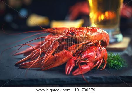 Crayfish. Boiled red crawfish with a beer and herbs on a slate table. Close up. Crayfish party, restaurant, cafe, pub menu