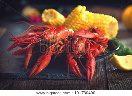 Crawfish, Crayfish Boil Close-up. Creole style crawfish boil serving with corn and potato