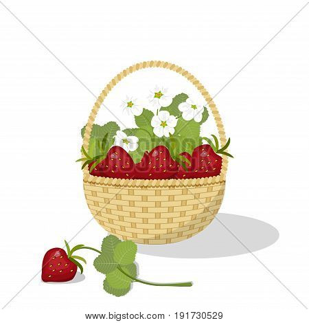 Basket with berries and flowers of strawberry, isolated on white background, vector illustration
