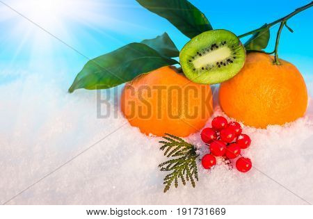 Christmas fruit in snow - orange red berries viburnum kiwi green leaf in snow before Christmas in sunny winter afternoon against the blue sky