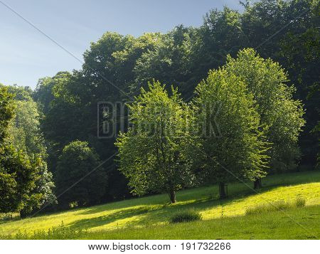 Landscape with trees and meadows on a sunny day, Teutoburger Wald, Germany