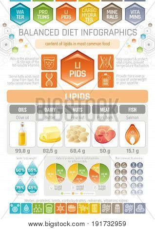 Fat lipids diet infographic diagram poster. Water protein lipid carbohydrate mineral vitamin flat icon set. Table vector illustration human health care, medicine chart. Food Isolated white background