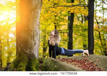 Beautiful Young Female Is Practicing Yoga And Doing Asana Urdhva Mukha Shvanasana In The Autumn Fore