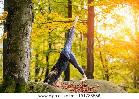 Attractive Young Female Is Practicing Yoga And Doing Asana Adho Mukha Shvanasana In Autumn Park On T