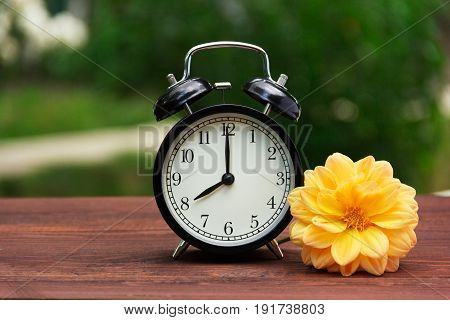 A classic black alarm clock in the garden on the table. A clock on a green natural background. Clock and yellow aster flower on a wooden table. Copy space