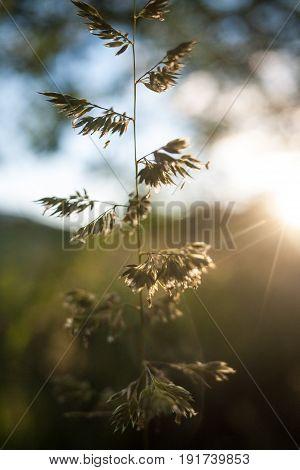 A single stem of grass is set ablaze by a setting sun