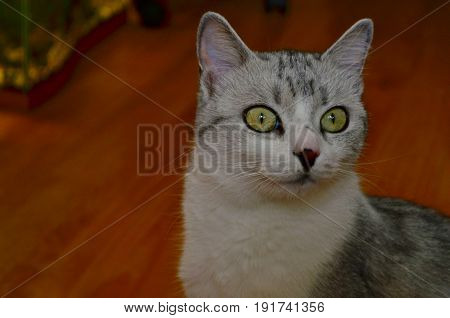 Beautiful cat with big eyes looking at someone