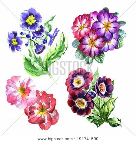 Wildflower viola flower in a watercolor style isolated. Full name of the plant: viola, violet. Aquarelle wild flower for background, texture, wrapper pattern, frame or border.