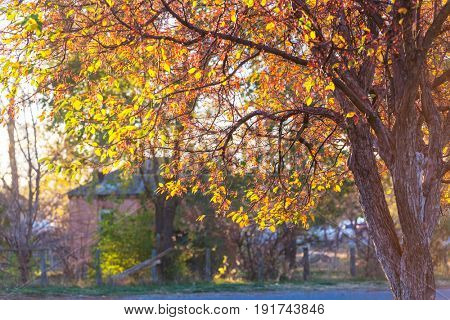 Autumn scene in yellow tones