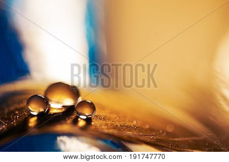 A drop of water on a golden feather with a blue background. A feather with a drop of water.