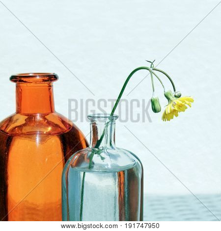 Two vintage glass jars and small yellow wild flower against a high key background. Retro country style still life with place for your text. Shallow depth selective focus.