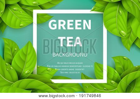 Green tea leaves vector nature background. Green tea background with leaf natural illustration