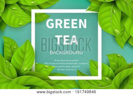 Green tea leaves vector nature background. Green tea background with leaf natural illustration