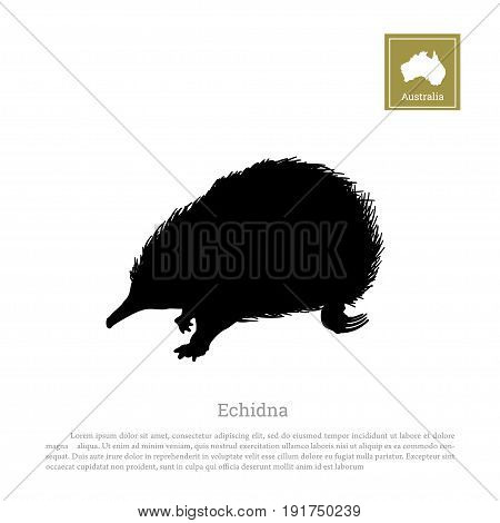 Black silhouette of echidna on a white background. Animals of Australia. Vector illustration