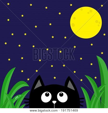 Black cat looking stars and moon in the dark night. Green grass dew drop. Cute cartoon character. Kawaii romantic animal. Greeting card. Flat Blue background. Isolated. Vector illustration