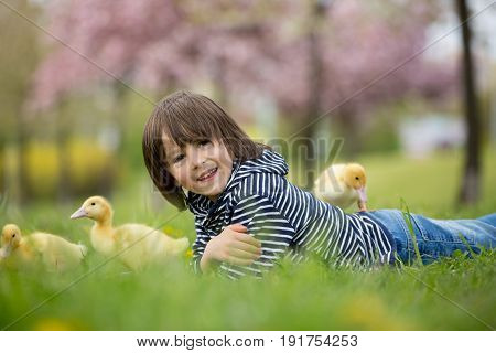 Cute sweet child boy playing in the park with ducklings springtime