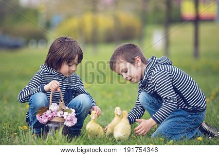 Two Sweet Children, Boys, Playing In The Park With Ducklings