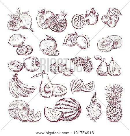 Vector sketch fruits for package design. Doodle illustrations set. Fruit sketch organic, sweet and juicy