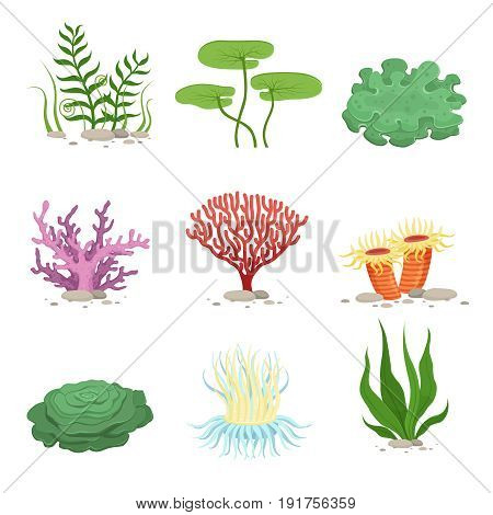 Sea aquatic fauna underwater plants and corals. Vector colorful ocean elements. Marine coral underwater and ocean, nature fauna illustration
