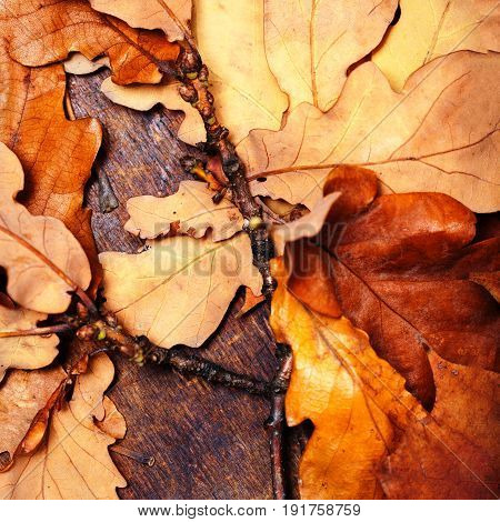 Yellow wet autumn leaves over wooden background with empty copy space for text. Abstract autumn backdrop