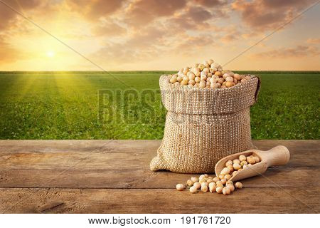 Uncooked  chickpea in sack. Chickpea in bag on table with chickpea field background. Agriculture and harvest concept. Photo with copy space area for a text. Green field on sunset