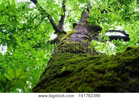 Picturesque moss on bark tree excursion in forest