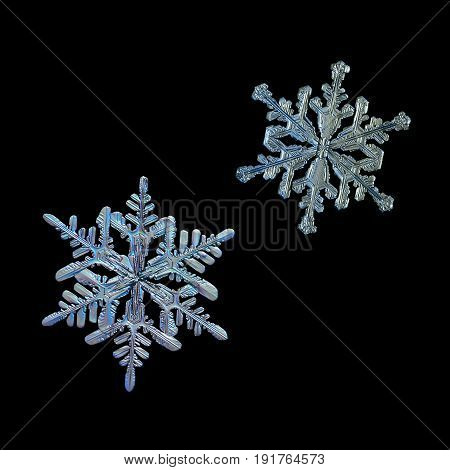 Set with two snowflakes isolated on black background. Macro photos of real snow crystals: small stellar dendrites with elegant shapes, relief surface and thin, ornate arms with side branches.