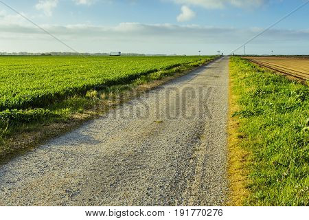 Empty Asphalt Country Road Passing Through Green And Flowering Agricultural Fields. Countryside Land
