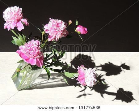 .A bouquet of peonies lit by the sun. A game of shadows. beautiful flowers