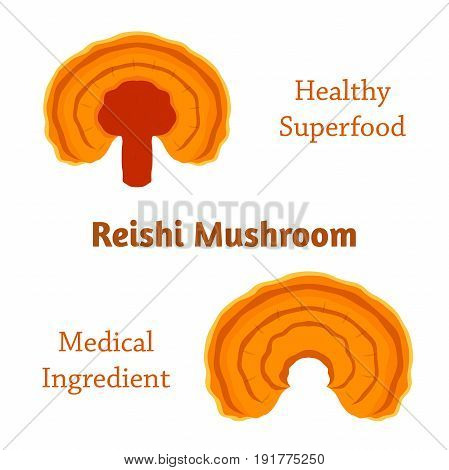 Reishi mushroom, Ganoderma lucidum made in flat style. Healthy organic superfood.