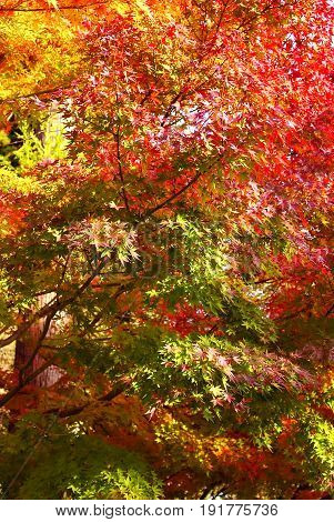 Autumn tree in sunny summer day vertical image