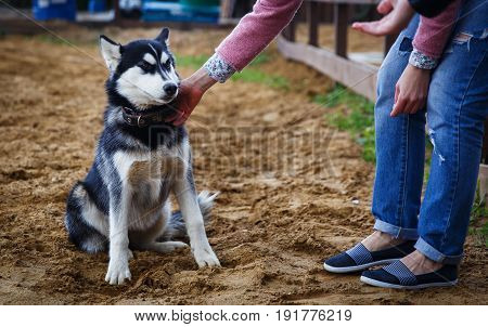 Photo of girl holding dog by collar in summer park in afternoon