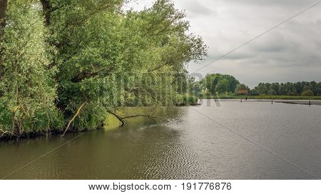 Overhanging willow trees in a wild freshwater tidal area in the Netherlands. It is low tide on a cloudy day in the spring season.