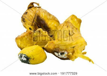 unhealthy food. Close up rotten jackfruit with mold isolated on white background.