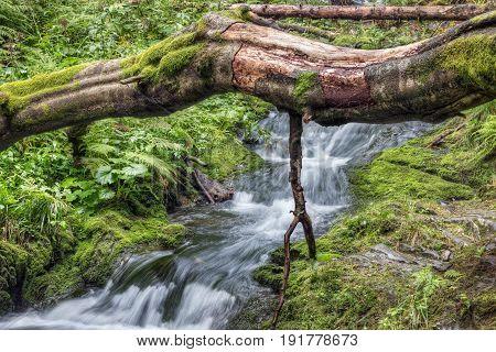 Fallen tree trunk over stream - waterfalls and rapids on the White Opava stream in Mountainous district Jesenik, Czech republic