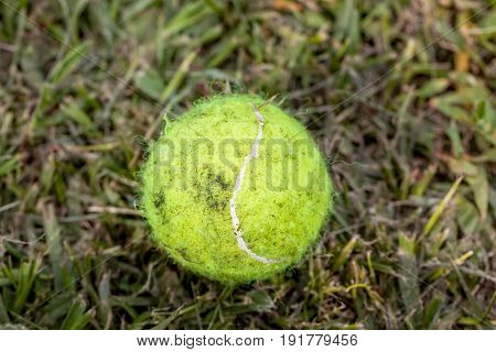 Dirty Yellow Tennis Ball Lying In The Green Wet Grass