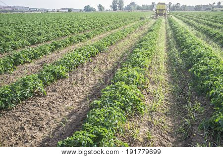 Tractor spraying pesticides over young tomato plants. Extremadura Spain