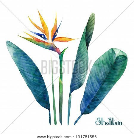 Watercolor strelitzia coletcion. Hand painted exotic leaves and flowers isolated on white background