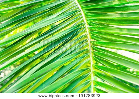 Spiky palm tree leaf texture close up green tropical foliage background summer vacation ocean vibrant colors