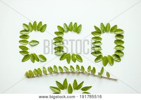 eco word composed of green leaves on white background