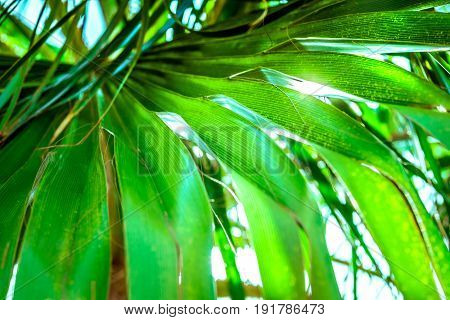 Big palm tree leaf in sunlight beams tropical foliage background close up abstract summer vacation seaside relaxation