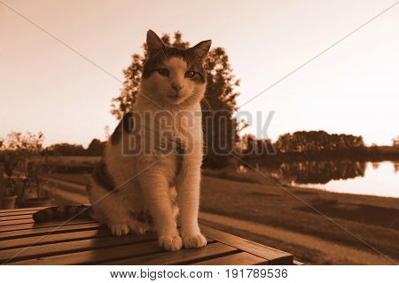 Cat sitting on a wooden table at the lake house