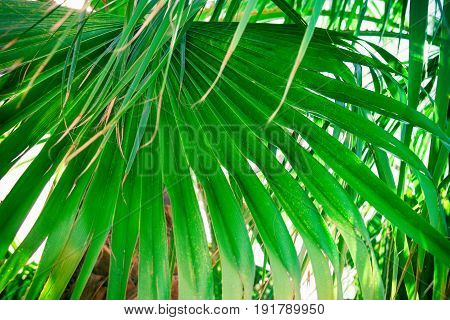 Big spiky palm leaf in tropical forest green foliage background summer vacation seaside ocean relax