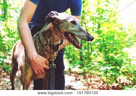 Man with his greyhound on a forest trail