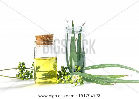 Eucalyptus essential oils in glass bottle organic herbal aromatherapy concept