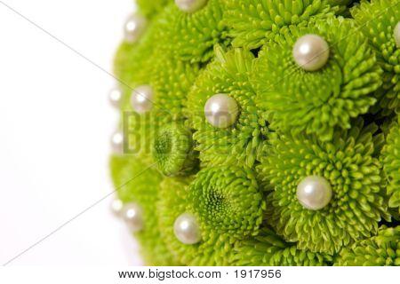 Chrysanthemum With Pearls