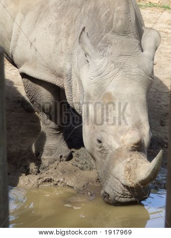 Rhino At Waterhole By Kaffine